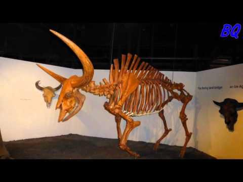 Cincinnati Natural History Museum