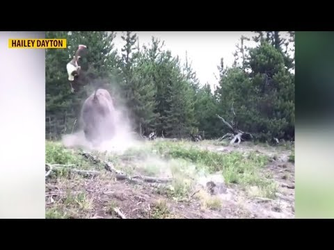 Patrick Sanders - (Video) 9 Yr Old Tossed & Hurt By Bison At Yellowstone Nat. Park