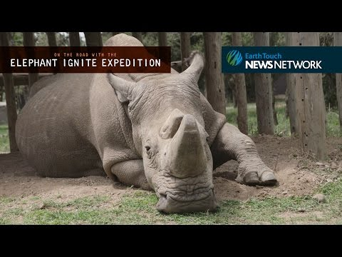 Facing Extinction: an encounter with the last male northern white rhino