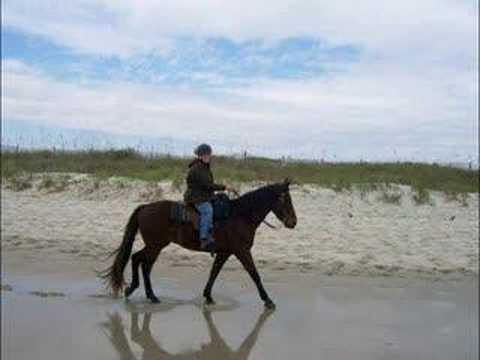 Riding Horses In Myrtle Beach Sc