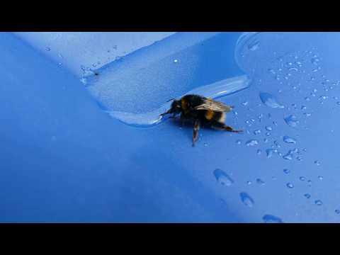 The Ace & TJ Show - People RESCUE a Backyard Bee!