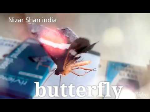 Malare ninne kanathirunnal new version by...