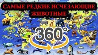 #ВИДЕО 360°# САМЫЕ РЕДКИЕ ИСЧЕЗАЮЩИЕ ЖИВОТНЫЕ
