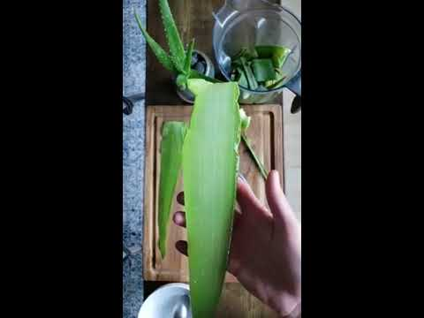 How to Cut & Extract Aloe Vera Gel from a Whole Leaf