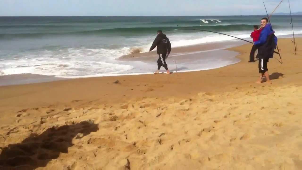Sydney Surf Fishing