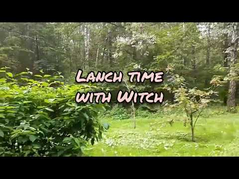Wiccan Vlog: запись 11. Lanch Time Witch Witch