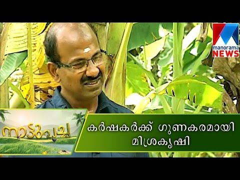 Mixed farming good for farmers | Manorama News