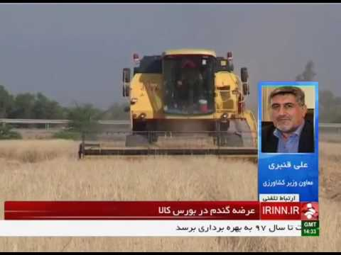 Iran Wheat supply for export in Tehran Stock Exchange عرضه گندم در بورس و صادرات ايران