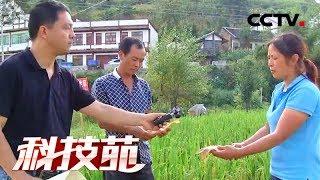 《科技苑》 20171212 山区稻田也能养出大鱼了 | CCTV农业