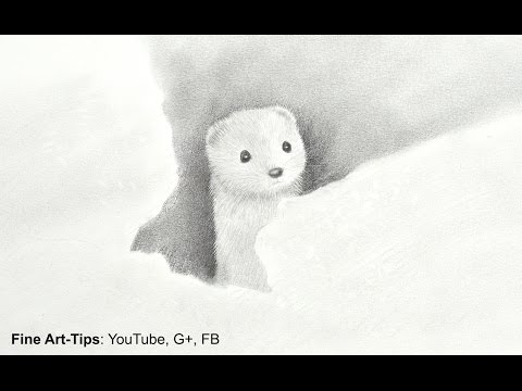 How to Draw an Ermine - Wiesel - Fur With Pencil