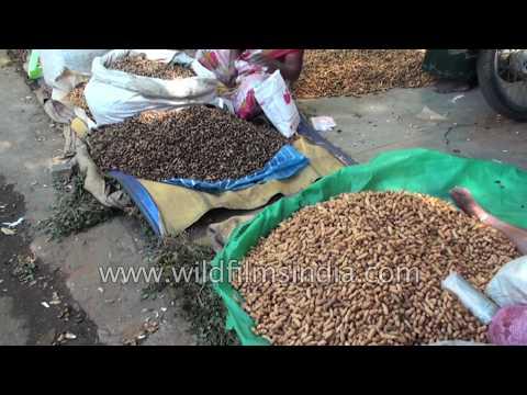 Groundnut fair or Kadalekai Parishe in Bangalore