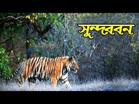 সুন্দরবন || Sundarbans National Park
