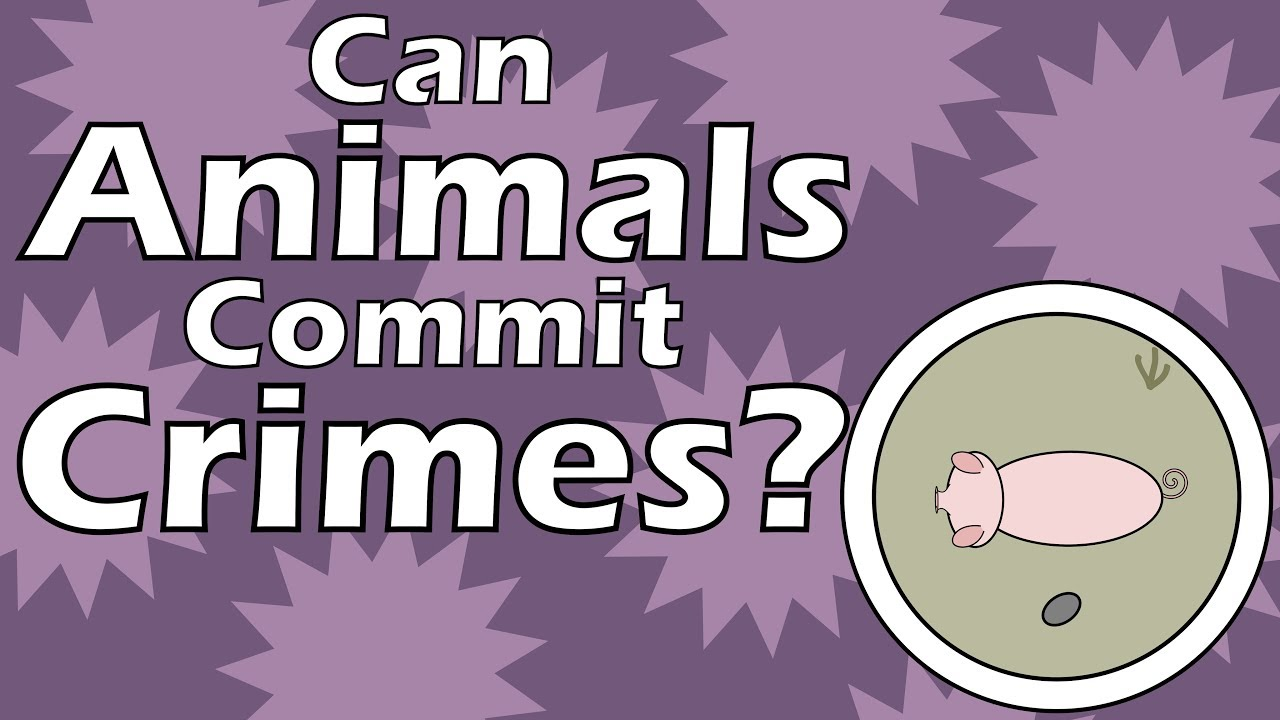 Can Animals Commit Crimes?