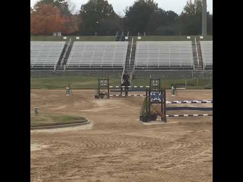 2018 - Cascor - 1st place 1.15 Georgia International Horse Park