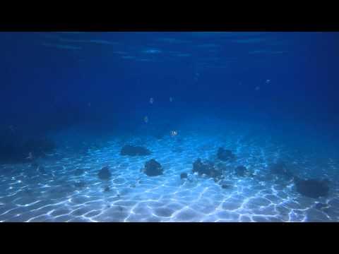 Unterwasser: Bahia de los Cochinos, Schweinebucht - Karibisches Meer - Kuba