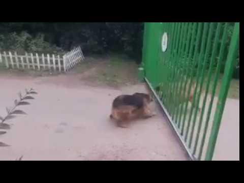 Cover Lagu Funny Dog HITSLAGU