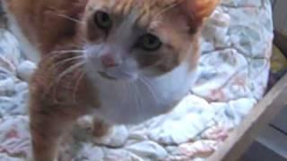 Kitty Corner Of Cny Boxer In Memory