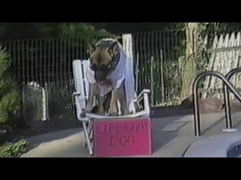 Doggie Lifeguard Will Save Your Life