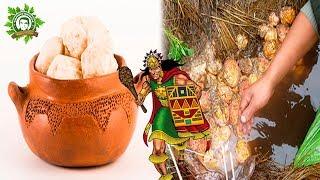 Tocosh, la Milenaria Penicilina Natural de los Incas Que No Pasa de Moda