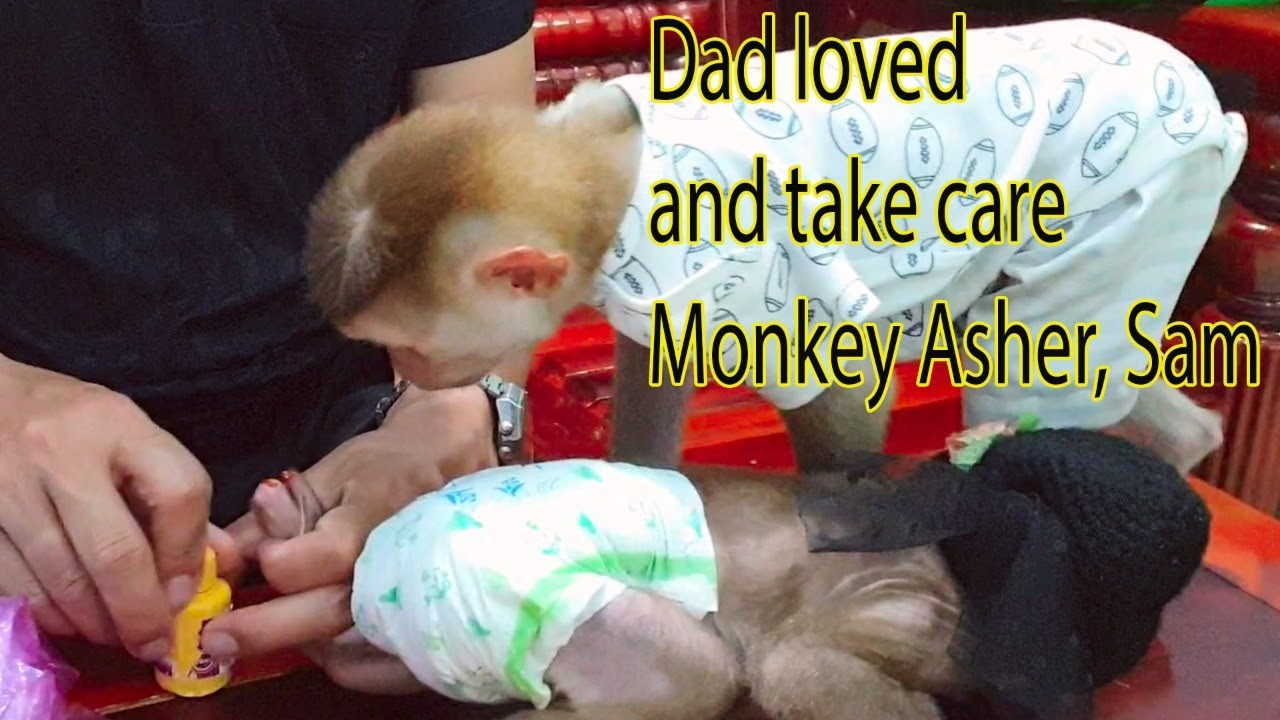 As a habit Khai takes care of Monkey Baby Asher and Sam before going to bed
