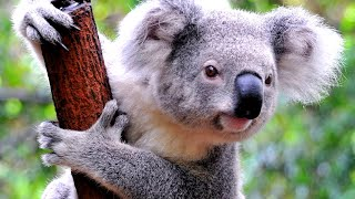 Inside Melbourne Zoo - Melbourne, Australia