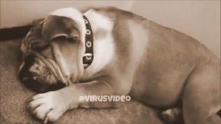 شخير كلب مضحك جدآٓ