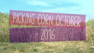 Picking Corn October 2016 in West Virginia