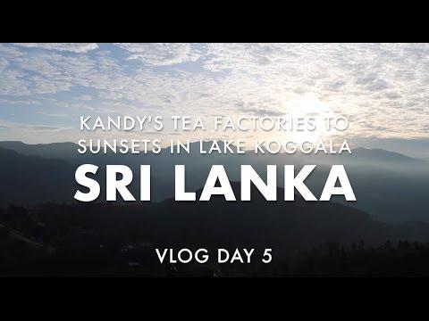 Tea Factory Tour in Kandy & Tri on Lake Koggala, Sri Lanka [Vlog 18]
