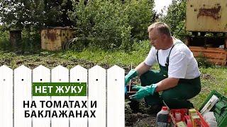 Колорадский жук на томатах и баклажанах  Боремся с ним!(, 2016-06-10T14:47:46.000Z)