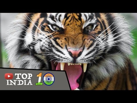 Top 10 Animals In India That May Go Extinct In The Next 10 Years    Top10INDIA