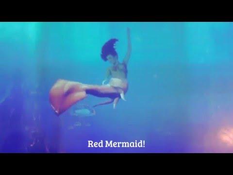 Different Mermaid Species