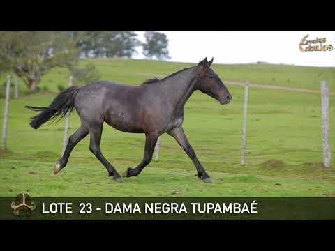 LOTE 23   DAMA NEGRA TUPAMBAÉ