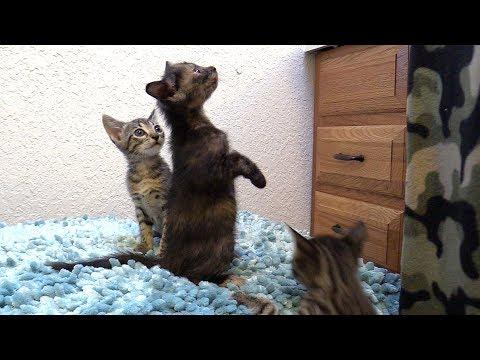 Meowning Kitten Choir