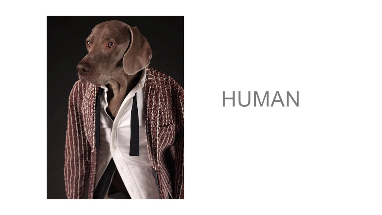 William Wegman: Being Human - YouTube