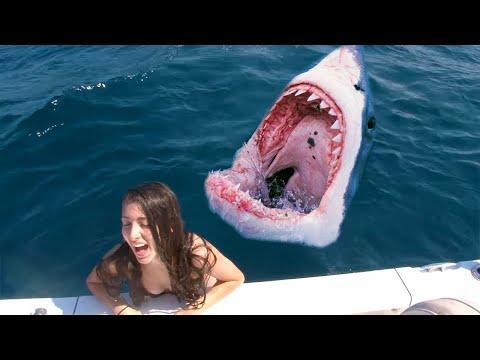 12 Shocking Shark Attacks Caught On Camera!