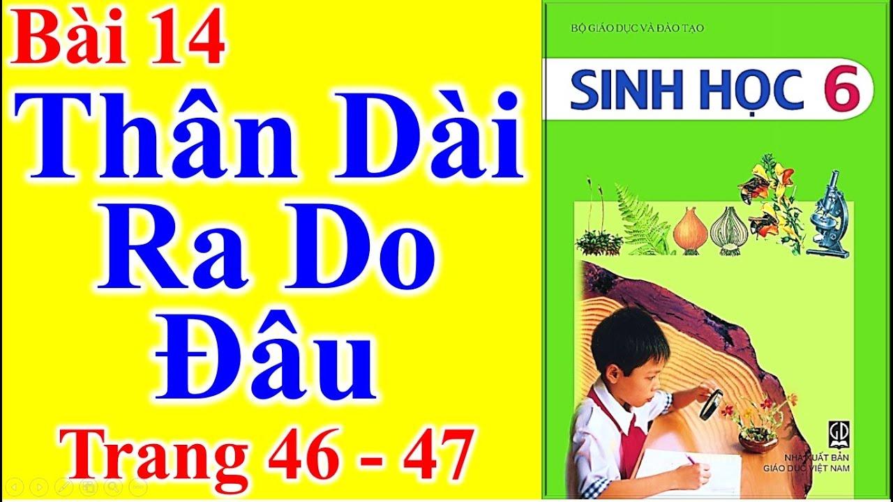 Sinh Học Lớp 6 Bài 14 – Thân Dài Ra Do Đâu – Trang 46 – 47