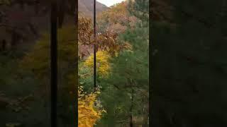 화담숲 단풍경치편2 모노레일에서조경