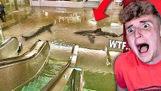 Shark Tank BREAKS Inside Mall.. (OH NO)