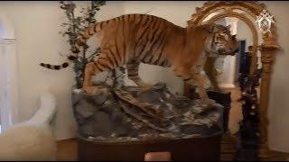 Чучело тигра и золотые пистолеты: новое видео из резиденции арестованного дагестанского чиновника