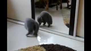 Кошки и злое зеркало