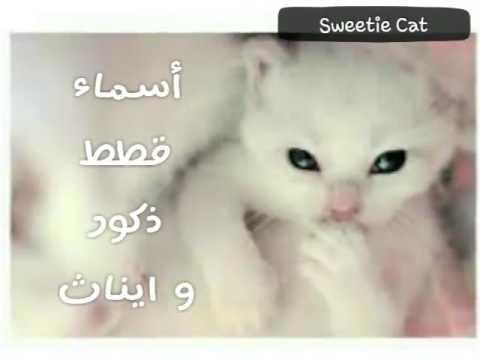 اسماء قطط The Names Of Cats Youtube