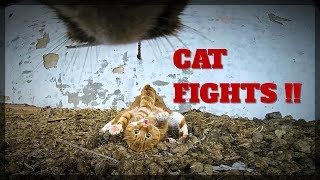 Real Cat FIGHTS with GoPro on cat