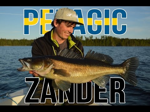 Gunki TV - Pelagic zander fishing in Sweden