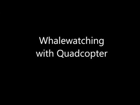 Whalewatching with Quadcopter