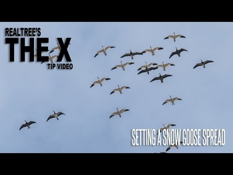 The X: How To Set A Snow Goose Spread