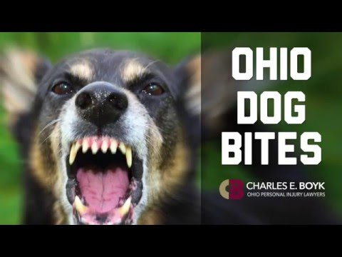Ohio Dog Bite Attorney - Know Your Legal Rights