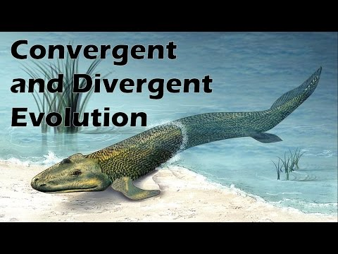 Convergent and Divergent Evolution