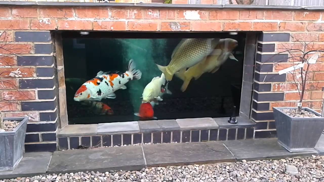 Koi pond viewing window youtube for Koi pond window