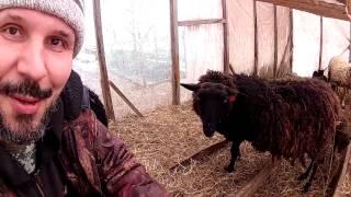 Козы, овцы и дрова\\ В деревню!