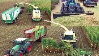 Maisernte - Maishäckseln / Silieren - Maismiete festfahren - Biogasanlage Kragen - Maize harvest